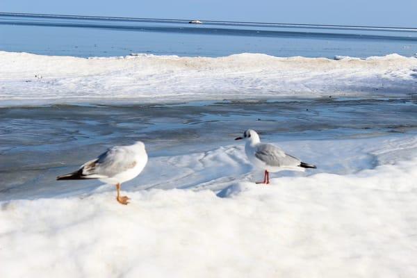 Winter am Nordstrand