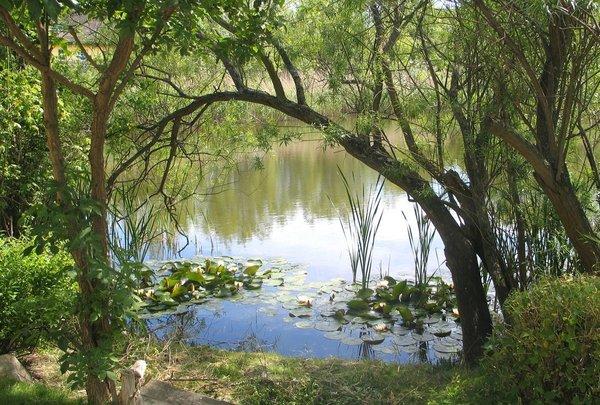 Nur wenige Schritte an den Teich - kann mann so viel Idylle aushalten?