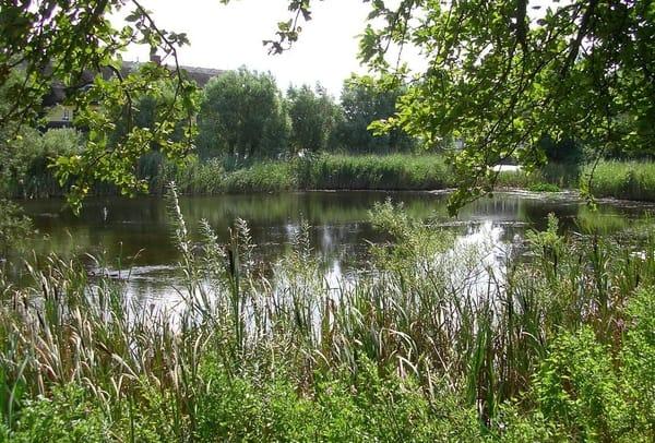 Ihre Unterkunft befindet sich unmittelbar an diesem herrlichen Teich - vielfältige Tiere und Pflanzen fühlen sich hier wohl