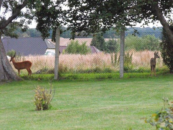 Besuch am Gartenzaun Sommer 2016