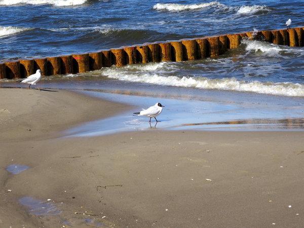 Strand mit Möwen