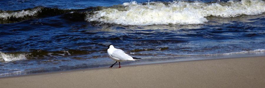 Strand Zempin mit Möwe