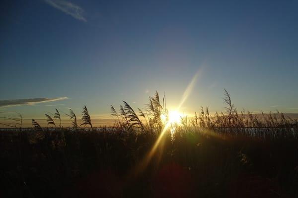 Ob Ostseestrand oder Bodden, in Dierhagen bieten sich alle Möglichkeiten für Naturliebhaber.