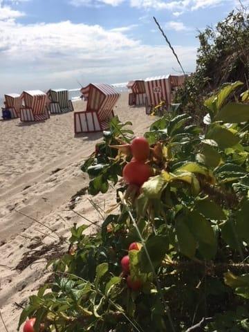 wenige Schritte zum Strand