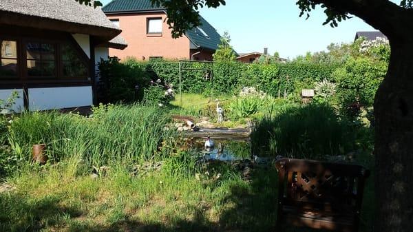 Blick auf den Gartenteich