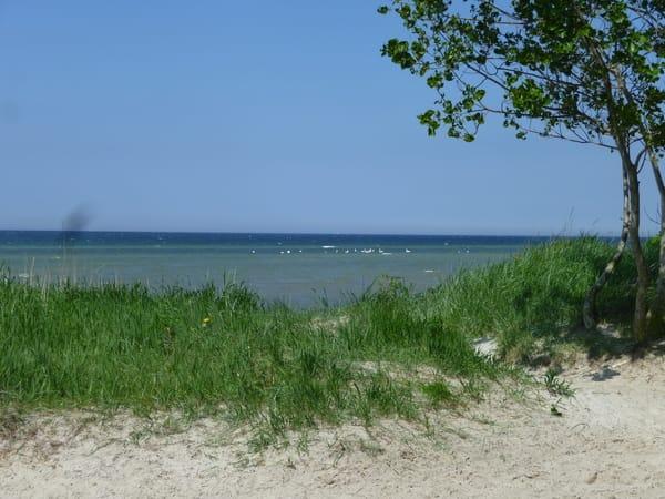 Am Strand vom schwarzen Busch