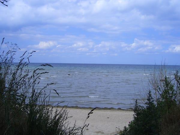 Strand am schwarzen Busch