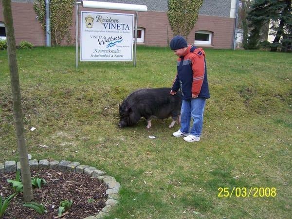 Die zamen Schweine vom Vieneta Hotell