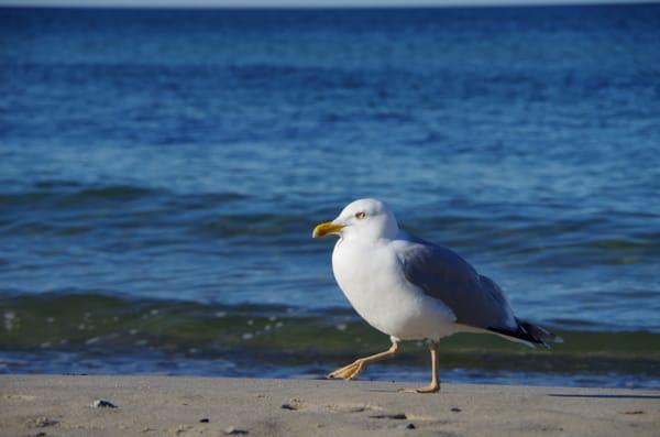 Strand mit Vogel