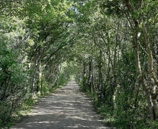 Rad- und Wanderwege, hier kann in der Natur entspannen