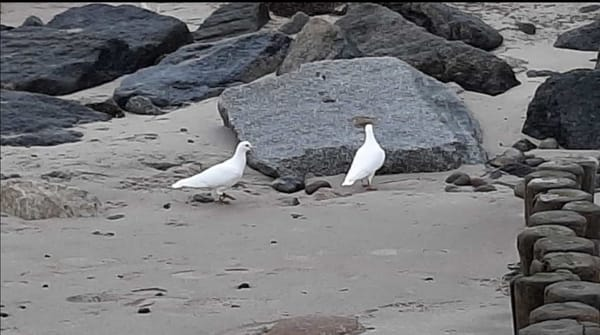 seltende Strandbesucher