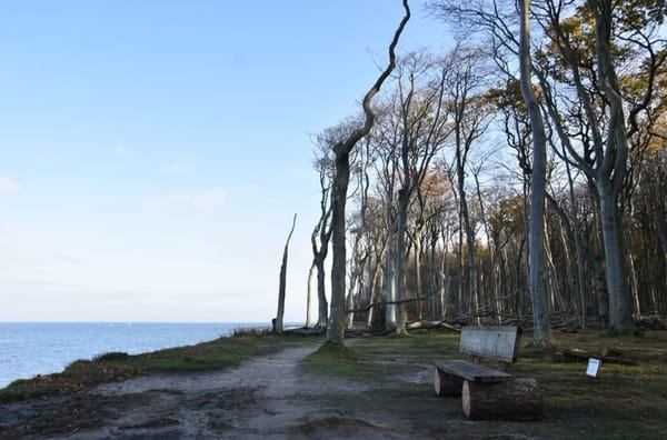 Gespensterwald von Nienhagen