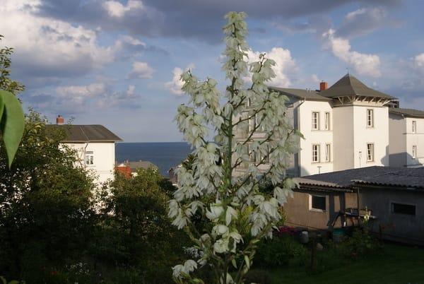 die Altstadt von Sassnitz - kleine Gassen, immer wieder mit Ausblick zur Ostsee
