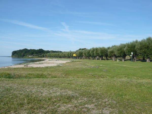 der schöne Naturstrand von Neuendorf mit den Kopfweiden