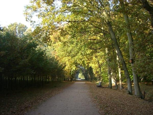 Herbst im Küstenwald