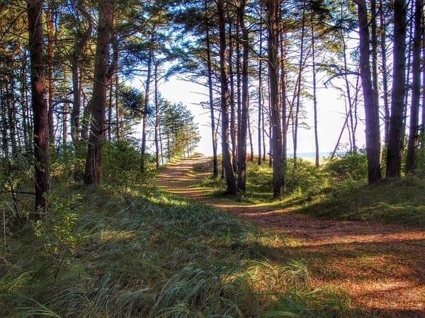 Waldweg zum Strand in Trassenheide