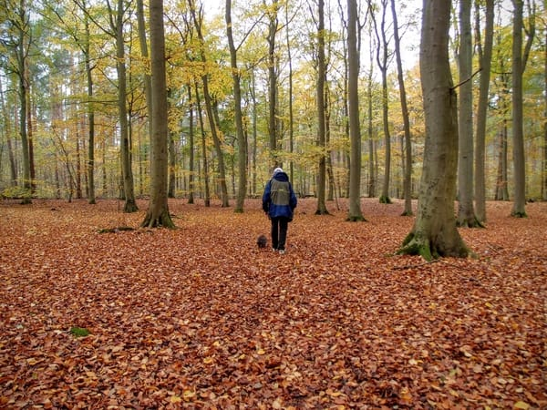 Herbstspaziergang im Wald von Kölpinsee