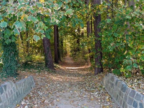 Waldweg an der Koserower Steilküste