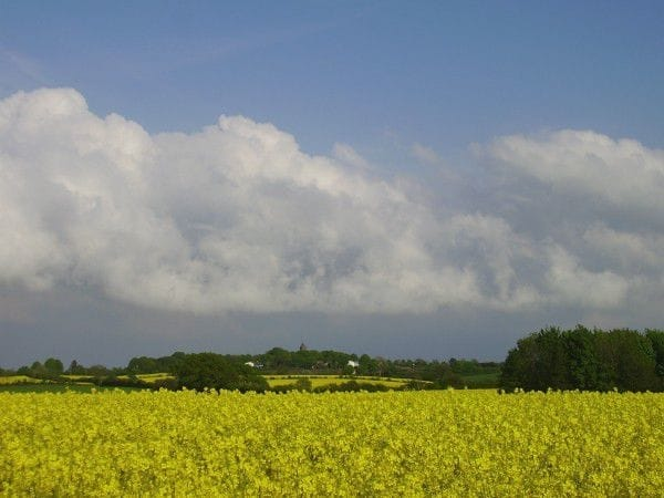 Rapsfeld im Mai, darüber ein toller Wolkenhimmel