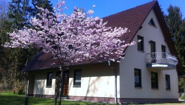 Unser Ferienhaus im Ostseebad Sellin mit drei Ferienwohnungen im Grünen gegen und trotzdem zentrumsnah