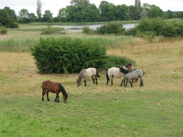 Manchmal sind Pferde zu Besuch da!