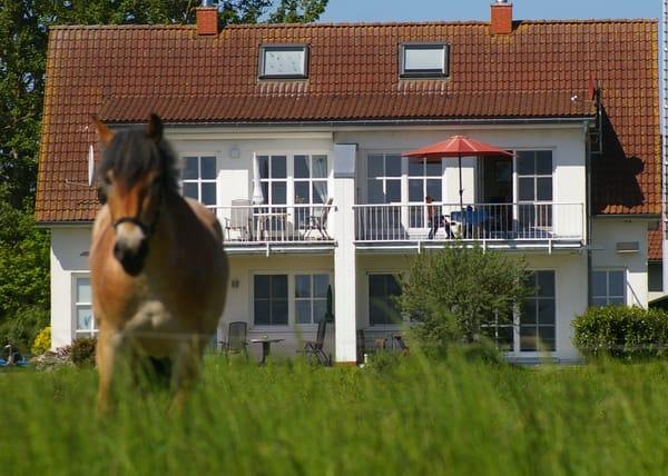 Pferde sind auch manchmal zu Besuch