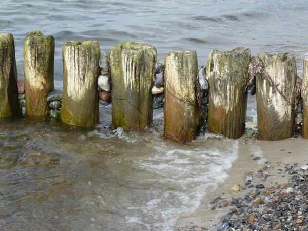 Strandgut am Stack