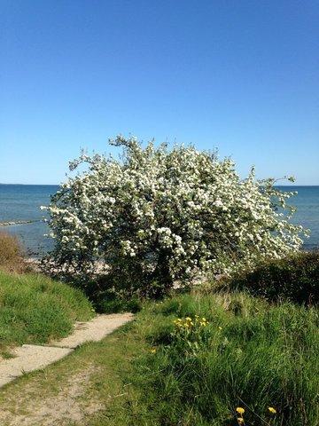 Frühlingserwachen am Wanderweg Südstrand