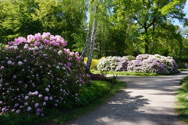 Rhododendronpark