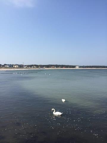 Schwanenpaar auf der Ostsee