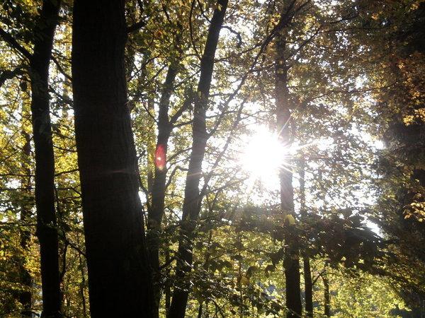 wunderschöner Wald zum Wandern