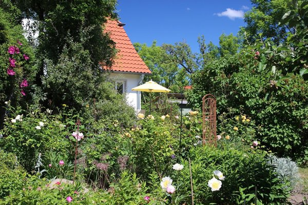 Blütenfreude im Garten