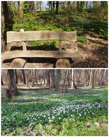 Frühling auf Usedom