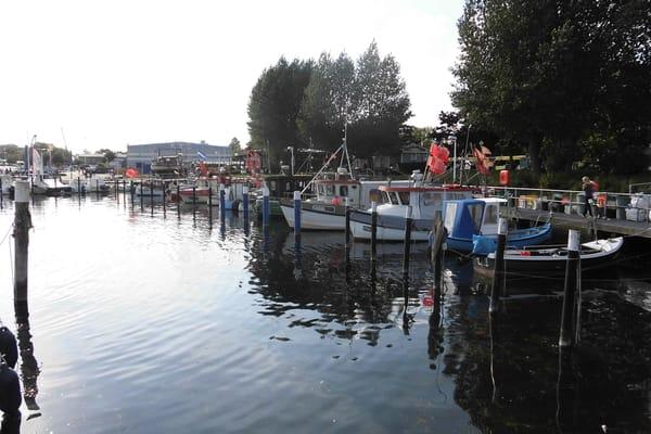Hafen Strande - frischen Fisch für die Gastronomie in Strande oder für die eigene Pfanne.