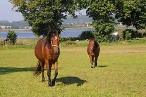 freier Blick zur Pferdekoppel und dem See