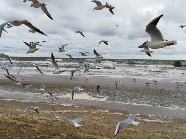 Möven am Ostsee Strand in Ückeritz