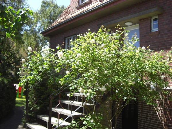 Zugang Haus / Garten