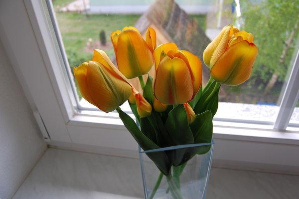 Blumen bereiten Freude