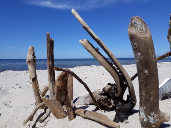Strandgut am Weststrand