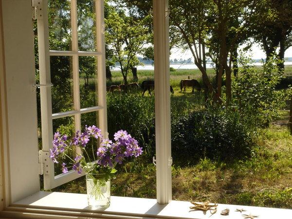 der Blick aus dem Küchenfenster auf den Bodden