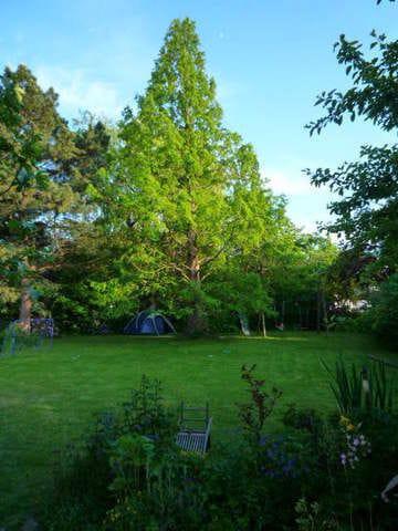 Schöner großer Garten