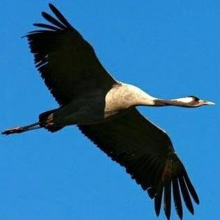 Vogelflug am Riedensee