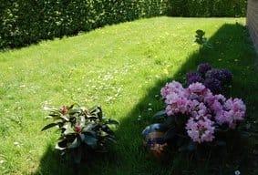 ... kleiner Blumengruß am Eingang