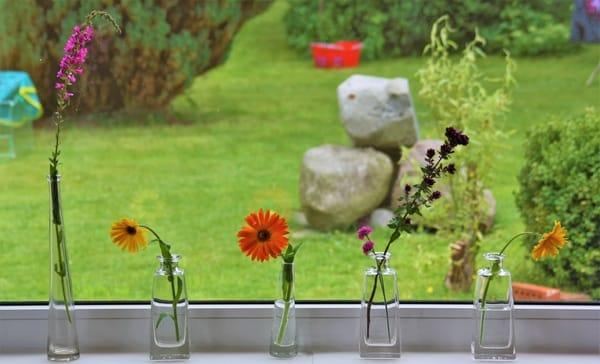 Die Blümchen finden Sie in bunten Mengen im Garten... :o)
