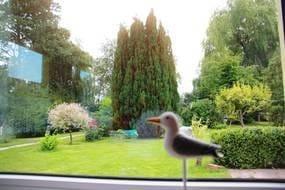 Die Hausmöwe schaut gern in den Garten