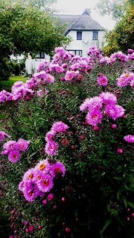 Zwischen Blumen Blick auf unser Haus