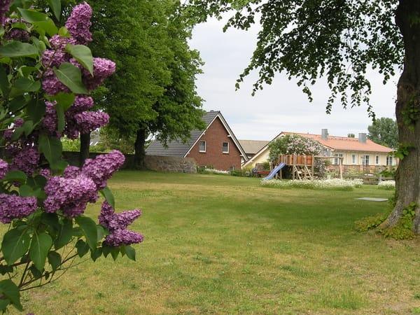 im Mai/ unsere Wiese mit 200 Jahre alten Linden