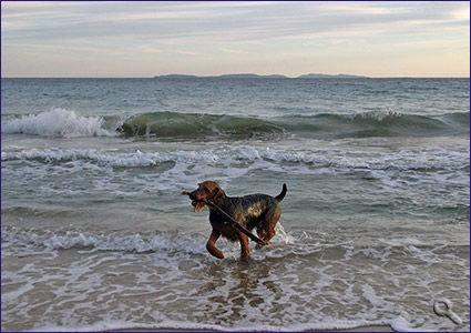 hundefreundlicher Strand