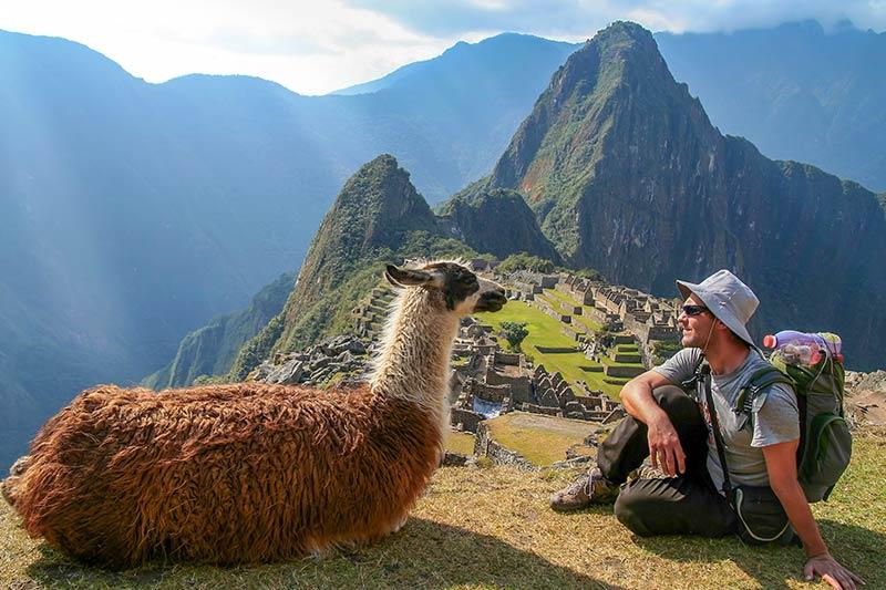 Lamas on the Mountainside