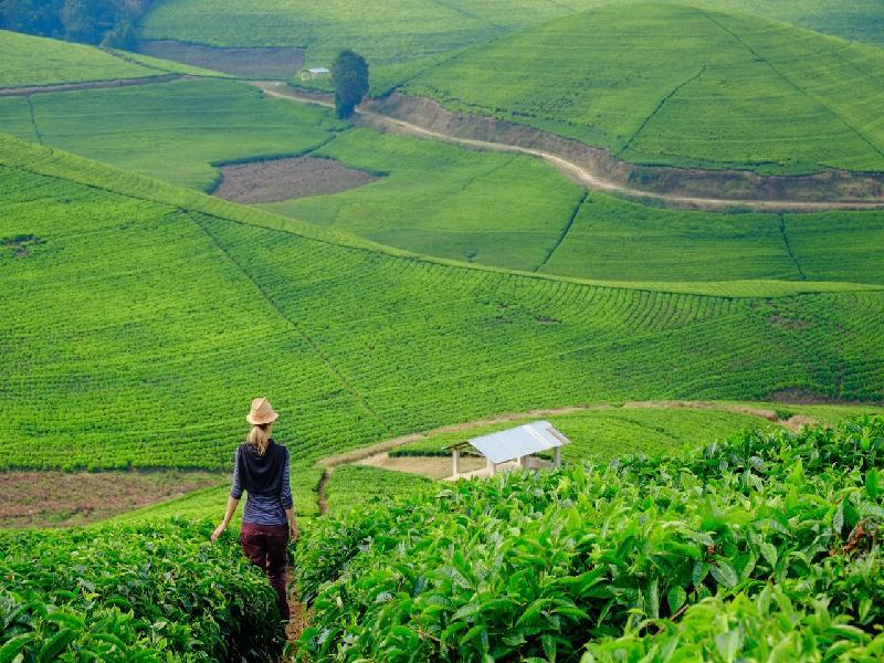 Rwanda Expedition